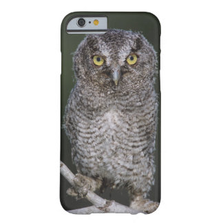 Eastern Screech-Owl, Megascops asio, Otus 2 Barely There iPhone 6 Case