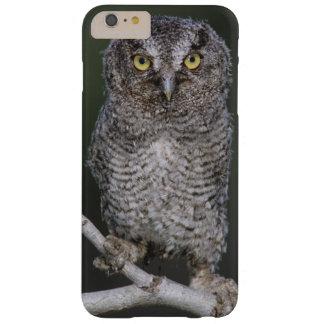 Eastern Screech-Owl, Megascops asio, Otus 2 Barely There iPhone 6 Plus Case