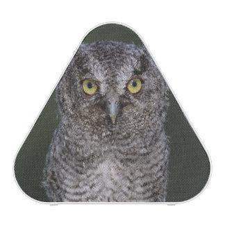 Eastern Screech-Owl, Megascops asio, Otus 2 Bluetooth Speaker