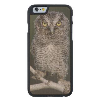 Eastern Screech-Owl, Megascops asio, Otus 2 Carved Maple iPhone 6 Slim Case