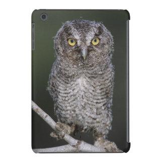 Eastern Screech-Owl, Megascops asio, Otus 2 iPad Mini Retina Case