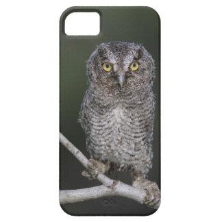 Eastern Screech-Owl Megascops asio Otus 2 iPhone 5 Case