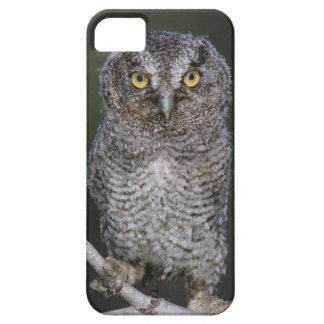 Eastern Screech-Owl Megascops asio Otus 2 iPhone 5/5S Covers