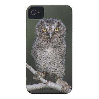 Eastern Screech-Owl, Megascops asio, Otus 2 iPhone 4 Covers
