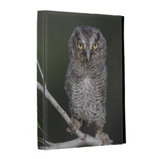 Eastern Screech-Owl, Megascops asio, Otus 2 iPad Case