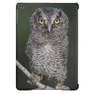 Eastern Screech-Owl, Megascops asio, Otus 2 iPad Air Cover