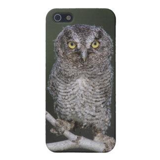 Eastern Screech-Owl, Megascops asio, Otus 2 Case For iPhone SE/5/5s