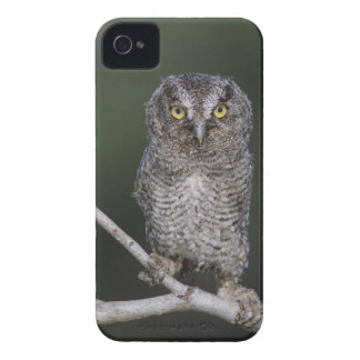 Eastern Screech-Owl, Megascops asio, Otus 2 Case-Mate iPhone 4 Case