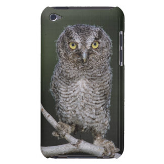 Eastern Screech-Owl, Megascops asio, Otus 2 Case-Mate iPod Touch Case
