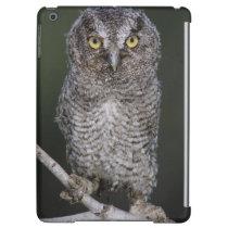 Eastern Screech-Owl, Megascops asio, Otus 2 Cover For iPad Air