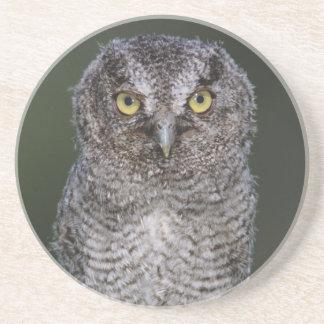 Eastern Screech-Owl, Megascops asio, Otus 2 Drink Coaster