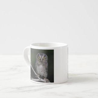Eastern Screech-Owl, Megascops asio, Otus 2 Espresso Cup