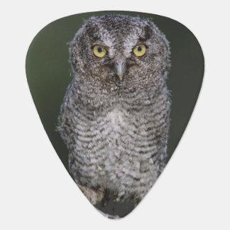 Eastern Screech-Owl, Megascops asio, Otus 2 Guitar Pick