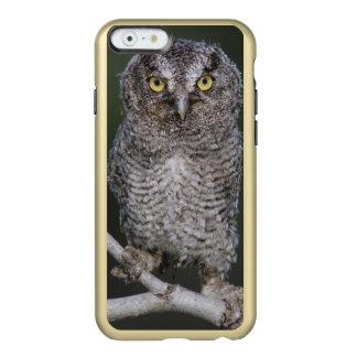 Eastern Screech-Owl, Megascops asio, Otus 2 Incipio Feather Shine iPhone 6 Case