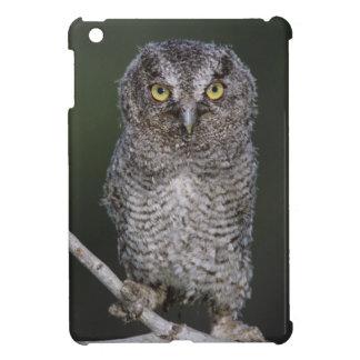 Eastern Screech-Owl, Megascops asio, Otus 2 Cover For The iPad Mini