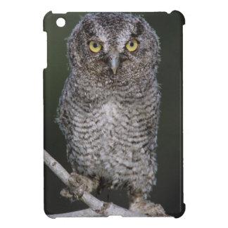 Eastern Screech-Owl Megascops asio Otus 2 iPad Mini Cover