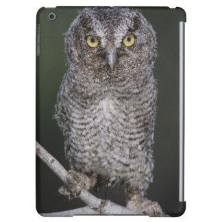 Eastern Screech-Owl, Megascops asio, Otus 2 Case For iPad Air