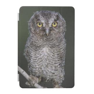 Eastern Screech-Owl, Megascops asio, Otus 2 iPad Mini Cover