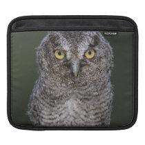 Eastern Screech-Owl, Megascops asio, Otus 2 iPad Sleeve