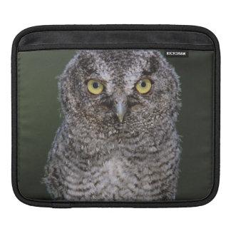Eastern Screech-Owl Megascops asio Otus 2 iPad Sleeve