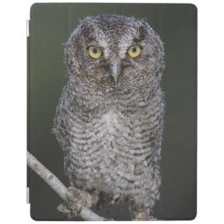 Eastern Screech-Owl, Megascops asio, Otus 2 iPad Smart Cover