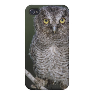 Eastern Screech-Owl, Megascops asio, Otus 2 iPhone 4/4S Covers