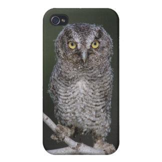 Eastern Screech-Owl, Megascops asio, Otus 2 iPhone 4 Case