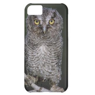Eastern Screech-Owl, Megascops asio, Otus 2 iPhone 5C Case