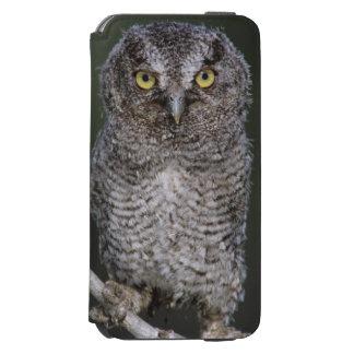 Eastern Screech-Owl, Megascops asio, Otus 2 iPhone 6/6s Wallet Case