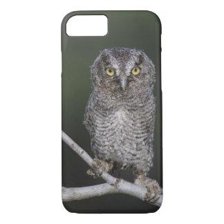 Eastern Screech-Owl, Megascops asio, Otus 2 iPhone 8/7 Case