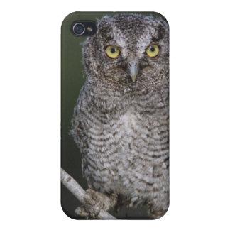 Eastern Screech-Owl Megascops asio Otus 2 iPhone 4/4S Covers