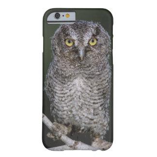 Eastern Screech-Owl Megascops asio Otus 2 iPhone 6 Case