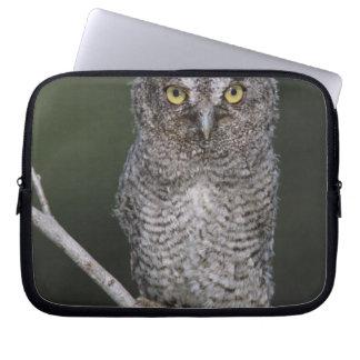 Eastern Screech-Owl, Megascops asio, Otus 2 Laptop Sleeve