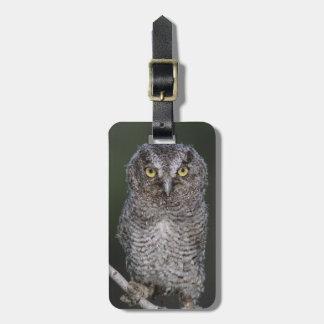 Eastern Screech-Owl, Megascops asio, Otus 2 Luggage Tag