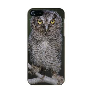 Eastern Screech-Owl, Megascops asio, Otus 2 Metallic iPhone SE/5/5s Case
