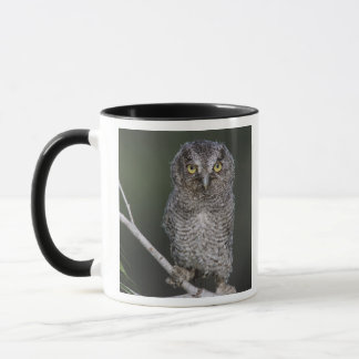 Eastern Screech-Owl, Megascops asio, Otus 2 Mug