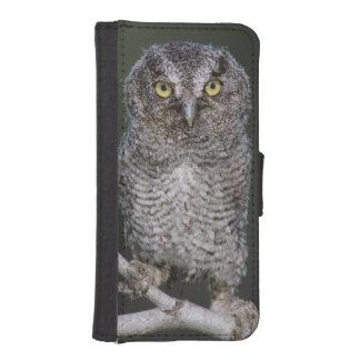 Eastern Screech-Owl Megascops asio Otus 2 Phone Wallet
