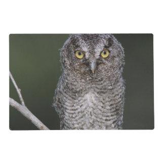 Eastern Screech-Owl, Megascops asio, Otus 2 Placemat