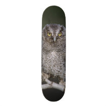 Eastern Screech-Owl, Megascops asio, Otus 2 Skateboard Deck
