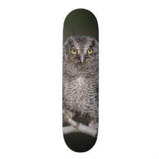 Eastern Screech-Owl, Megascops asio, Otus 2 Skateboard Deck