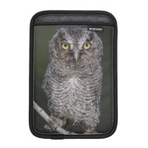 Eastern Screech-Owl, Megascops asio, Otus 2 Sleeve For iPad Mini