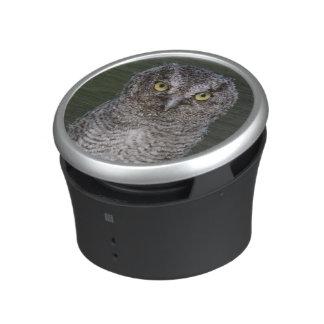 Eastern Screech-Owl, Megascops asio, Otus 2 Speaker