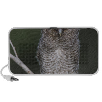 Eastern Screech-Owl Megascops asio Otus 2 Portable Speakers