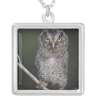 Eastern Screech-Owl, Megascops asio, Otus 2 Square Pendant Necklace