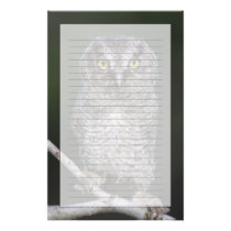 Eastern Screech-Owl, Megascops asio, Otus 2 Stationery