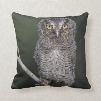 Eastern Screech-Owl, Megascops asio, Otus 2 Throw Pillow