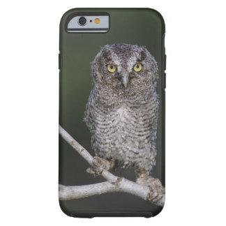 Eastern Screech-Owl, Megascops asio, Otus 2 Tough iPhone 6 Case