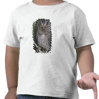 Eastern Screech-Owl, Megascops asio, Otus 2 Tee Shirts