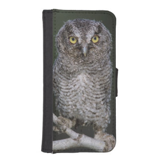 Eastern Screech-Owl, Megascops asio, Otus 2 Wallet Phone Case For iPhone SE/5/5s