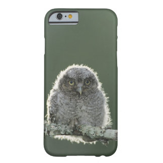 Eastern Screech-Owl, Megascops asio, Otus 3 Barely There iPhone 6 Case